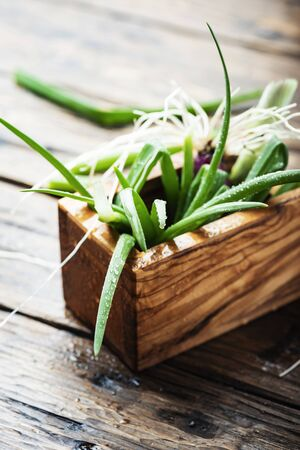 Fresh spring green onion on wooden background - selectie focus Image