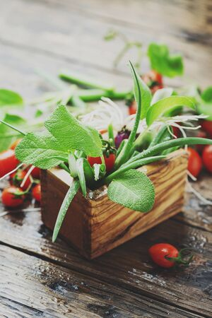 Concept of health vegan food with sage, green onion and tomato, selective focus and toned image 免版税图像