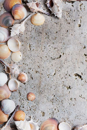 Summer concept. Seashells on the light marble background. Top down view with copy space for text