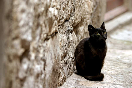 Lonely black street cat waiting for some food photo