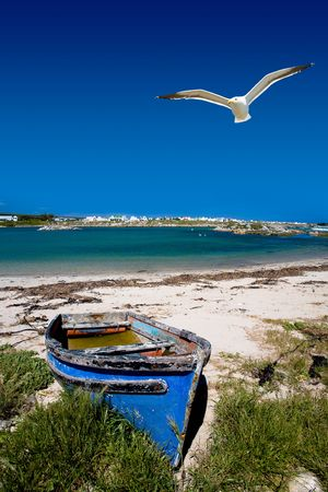Old blue wooden boat on the sandy shore with a seagul hovering above. photo