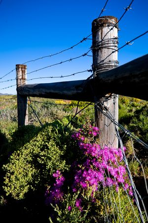 Barbed fence with colourful purple flowers in the forground. Stock Photo - 6716438