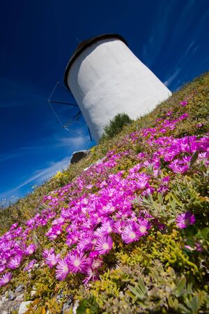 A diagonal shot of a windmill on a summers day with beautiful blue skies in the background and purple flowers in the foreground Stock Photo - 6716564
