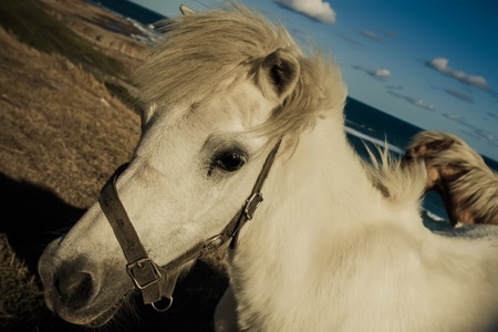 White charming horse near the seaside in summer. photo