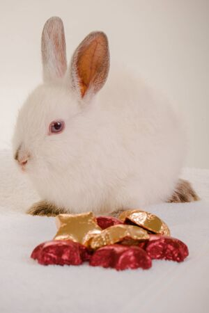 A small white rabbit with red and gold chocolates photo