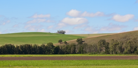 The farmer's working land in the Western Cape. Stock Photo - 16018495