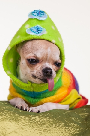 long shot: A dog dressed in green and other colours.