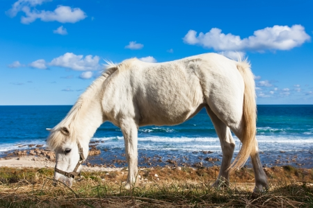 caballo bebe: Un caballo blanco whild caminando por la playa.