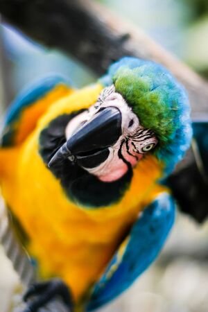 parot: A blue, green and yellow parot sitting on a stick.