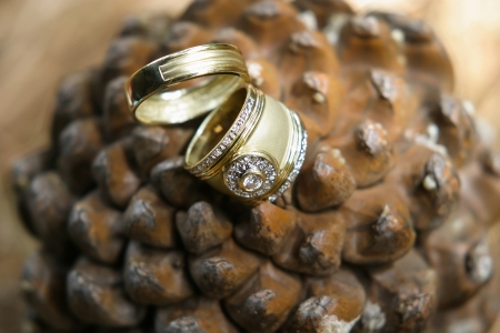 Two wedding rings being photographed in nature. Stock Photo - 17579299
