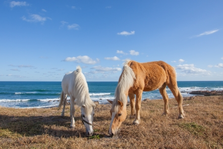 steed: Two horses whey in the field  next two the ocean.
