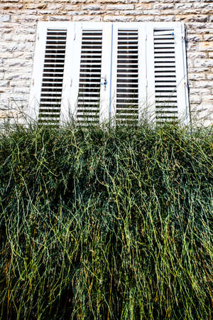 image of a white wooden windowshutters on an old stone building with grass growing wildly out of the windowsill