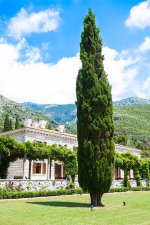 a large tree standing lonely in the lawn of an old stone house with brown shutters with the mountains reaching the blue sky in the background