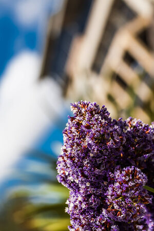 a close-up of a tiny flowered purple plant with a building in the background