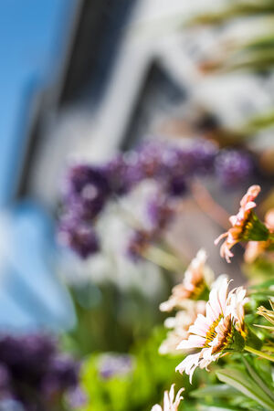 image of dainty flowers peeking out form the corner soakin up the warm sun Stock Photo