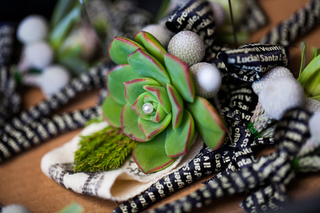 close-up image of a succulant green and red fat plant with a peal placed in the center of it as decoration for the groom