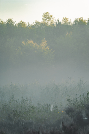 Foggy morning in the Amerongse Bos with distant trees barely visible