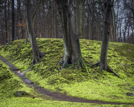 three dark wet trees on bright green moss forest floor. Walking through the park Stockfoto