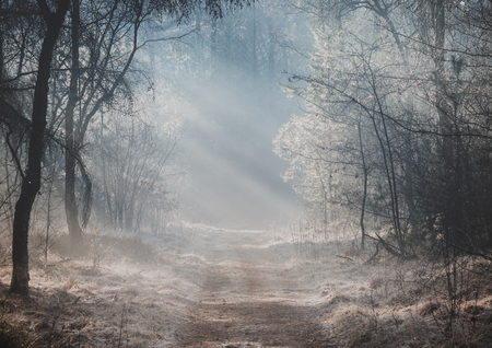 Beautiful sunlit forest trail on a misty morning with sun rays lighting up the forest floor 스톡 콘텐츠