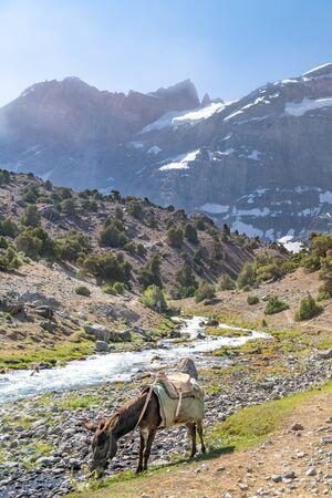 The domestic donkey on the duty of carrying cargo on saddle in Fann mountains in Tajikistan near to fresh mountain stream Reklamní fotografie