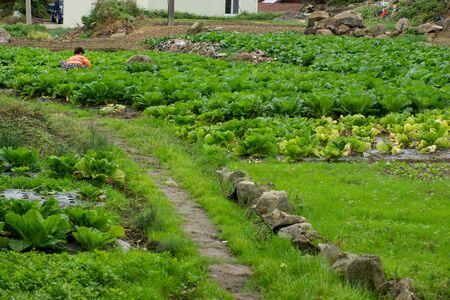 The village agriculture in South Korea Zdjęcie Seryjne