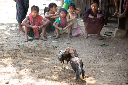 Duya/Myanmar-24.02.2017:The cock-fight in the smal fisherman billage. Small kids are looking at it.