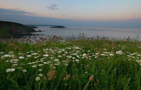 These cliffs which are covered in wild flowers are overlooking Burgh island on the horizon at Dawn. photo