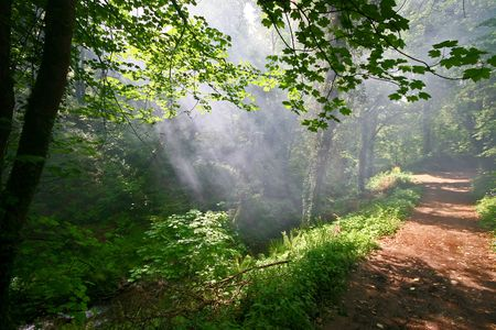 ramble: A gentle mist is lit by sunlight as it hangs low in the valley that is St Nectans Glen near Tintagel Stock Photo