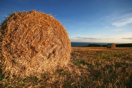 Rolled hay bales in a field near the sea in Devonshire UK photo
