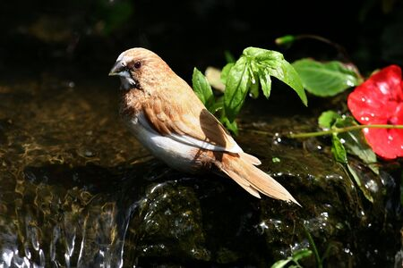 flew: This beautiful little finch flew to albiet briefly to this small waterfall for a drink.