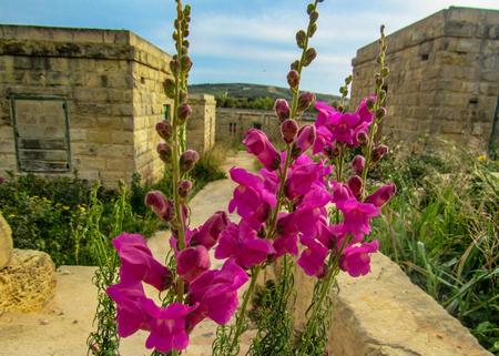 Rural landscape of the Maltese countryside between Xemxija and Manikata, Malta 版權商用圖片