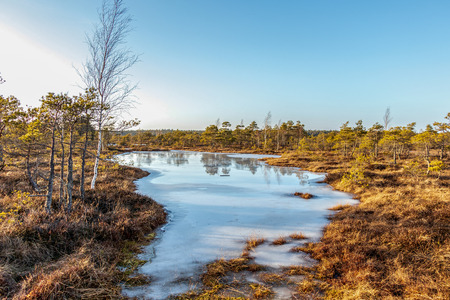 Kemeri Great swamp scenic landscape with lonely standine pine tree, small tiny frozen water ponds and poor flora of winter peat bog of Kemeri national park, Latvia, Northern Europe Reklamní fotografie