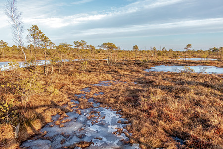 Kemeri national park, Latvia, Northern Europe: Scenic landscape of Kemeri Great swamp with small tiny frozen lakes and autumn colored flora of winter peat bog and its reflection on the ice