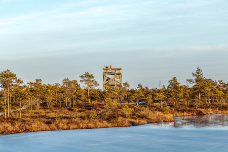 Nature landscape with icy marsh with frosty ground, ice on swamp lake and poor bog vegetation – cold in moor and autumn colored flora of winter peat bog with evening sun light at golden hour