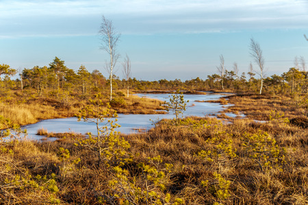 Kemeri national park, Latvia, Northern Europe: Peaceful nature of Kemeri Great swamp with small tiny frozen lakes and autumn colored flora of winter peat bog and its reflection on the ice