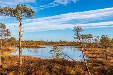 Kemeri national park, Latvia, Northern Europe: Kemeri Great swamp scenic landscape with small tiny frozen lakes and autumn colored flora of winter peat bog