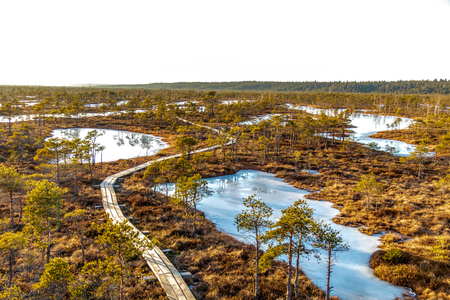 Aerial view of Kemeri National park Great swamp landscape: wooden footpath with beautiful evening sun light at golden hour and autumn colored flora of winter bog. Nature of Latvia, Northern Europe