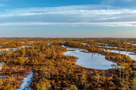 Kemeri national park, Latvia, Northern Europe: Tranquil background with Kemeri Great swamp with small tiny frozen lakes and autumn colored flora of winter peat bog and its reflection on the ice