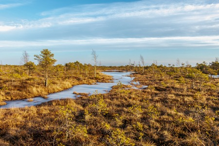 Kemeri national park, Latvia, Northern Europe: Scenic landscape of Kemeri Great swamp with small tiny frozen lakes and autumn colored flora of winter peat bog with blue sky in sunny winter day