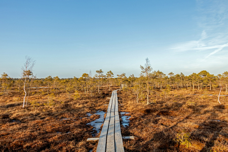 Trail along the wooden walkways through moorland in Kemeri National park, Jurmala. Natural background with nature of Latvia, Northern Europe