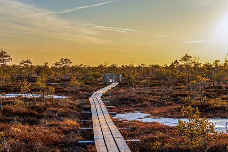 Wooden footpath in swamp with beautiful evening sun light at sunset and autumn colored flora of winter bog, Northern Europe nature