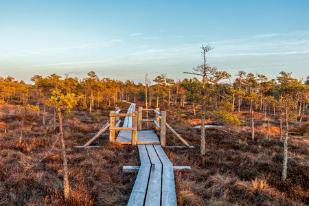 Nature of Latvia, Great Kemeri Swamp: Panoramic autumn landscape with wooden path over the swamp at sunset. Fall nature background Reklamní fotografie