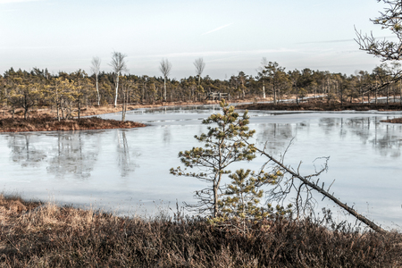 Kemeri national park, Latvia, Northern Europe: Picturesque scenery of Kemeri Great swamp with small tiny frozen lakes and autumn colored flora of winter peat bog and its reflection on the ice