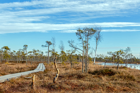 Wooden footpath on the bog with autumn colored flora at winter with beautiful evening sun light at golden hour