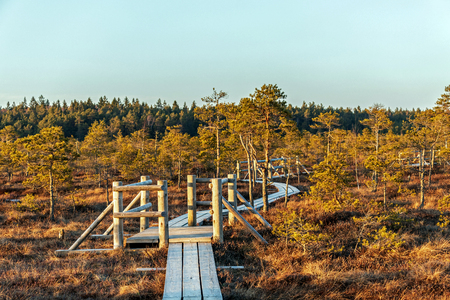 Wooden footpath on the bog with autumn colored flora with beautiful evening sun light at golden hour, Northern Europe landscape background Reklamní fotografie