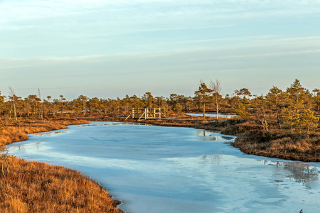 Nature landscape with icy cold marsh with frosty ground, ice on swamp lake and poor bog vegetation – freeze temperatures in moor and autumn colored flora of winter peat bog in sunny day with blue sky