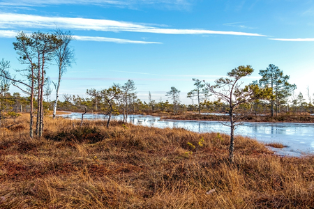 Kemeri national park, Latvia, Northern Europe: Scenic landscape of Kemeri Great swamp with autumn colored flora of winter swamp moorland at sunny winter day with blue sky, Latvia, Northern Europe Reklamní fotografie