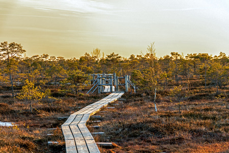 Wooden footpath in swamp with beautiful evening sun light at golden hour and autumn colored flora of winter bog of Kemeri Great swamp wetland in Kemeri national park, Jurmala, Latvia, Northern Europe Reklamní fotografie