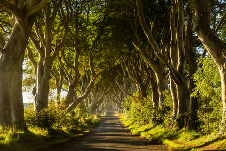 hedges: The Dark Hedges, County Antrim, Northern Ireland Stock Photo