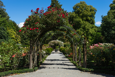 A covered flower covered archway in a rose garden Stock Photo